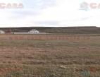 Vanzare teren Intravilan Murfatlar  pret 12000  EUR
