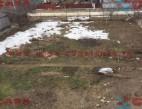 Vanzare teren Intravilan Constanta Mamaia Sat pret 75000  EUR