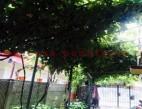 Vanzare Casa la sol Constanta Palas pret 83000  EUR