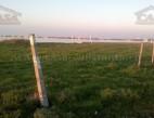 Vanzare teren Intravilan Constanta Palazu Mare pret 95  EUR